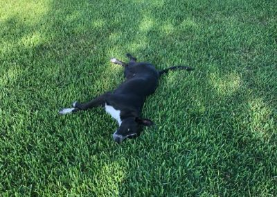 grass-treatment-with-dog
